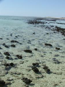 Living Stromatolites, Western Australia