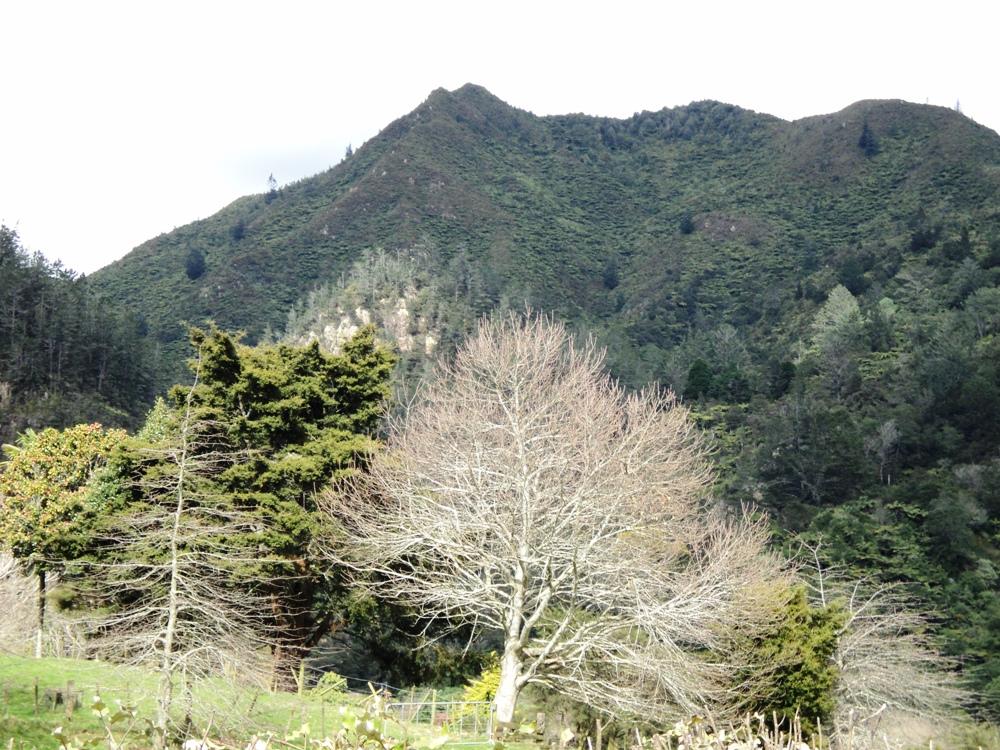 Karangahake Mine, New Zealand