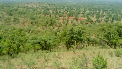 Photo of Savary Advancing its Burkina Faso Gold Project
